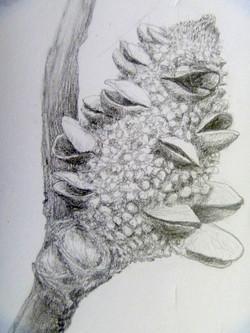 """""""Banksia"""" (detail)"""