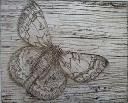 """Little Moth"""