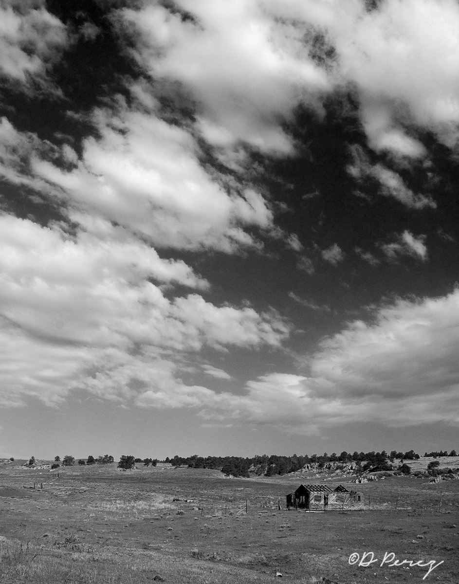 6889_homestead bw