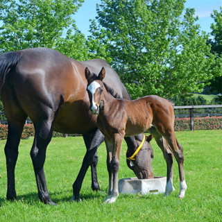20 Unapologetic x Star Witness Colt