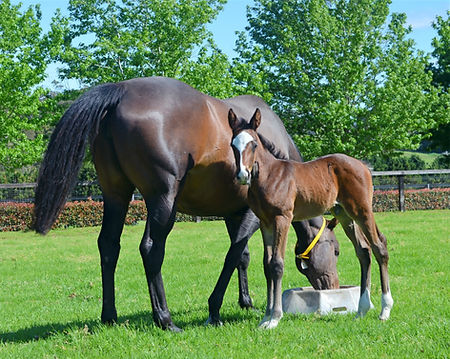 unapologetic%20and%20foal%203_edited.jpg