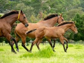 Glen Lee, Mares and Foals_26-01-21, Shar