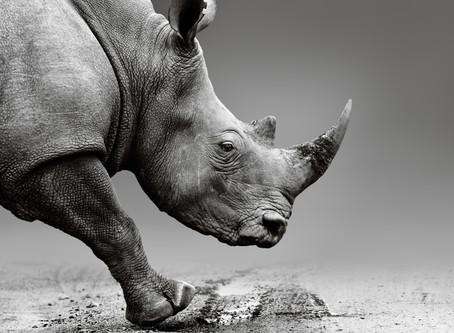 Trigger Warnings & Rhino Skin-    Part 1