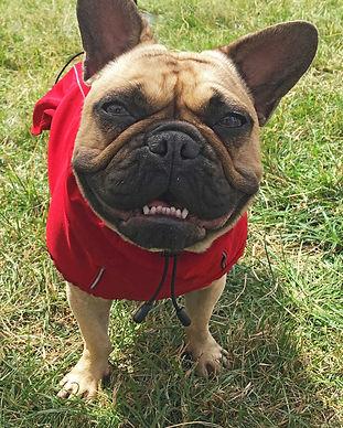 weather proof dog jacket.jpg