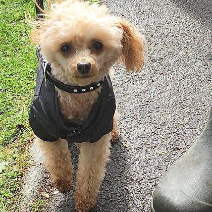 Black Weather-Protect Dog Jacket