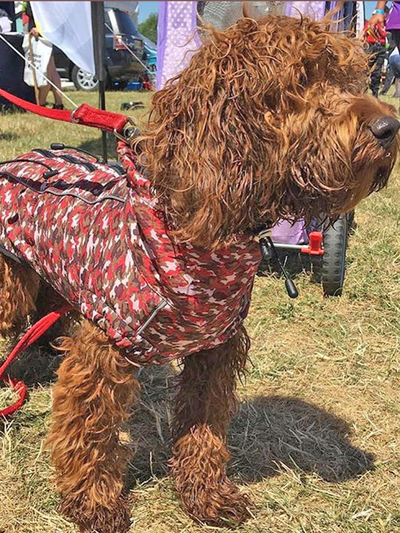 kerapets.shop dog jacket.jpg
