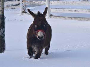 Snow...Fundraiser... and Orphan Lamb...