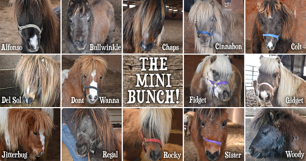 15 ponies rescued March 2019