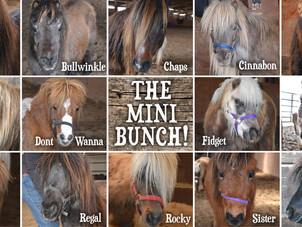 15 Ponies Rescued!