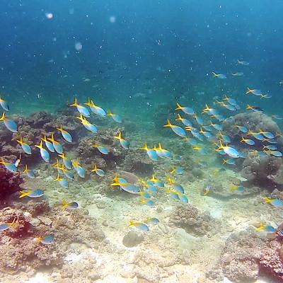 沙巴潛水旅行 Diving in Sabah