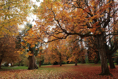 秋天的史丹利公園