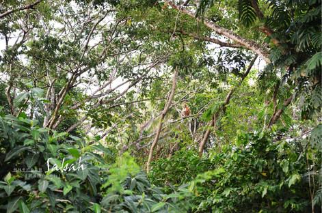 生態 Ecological