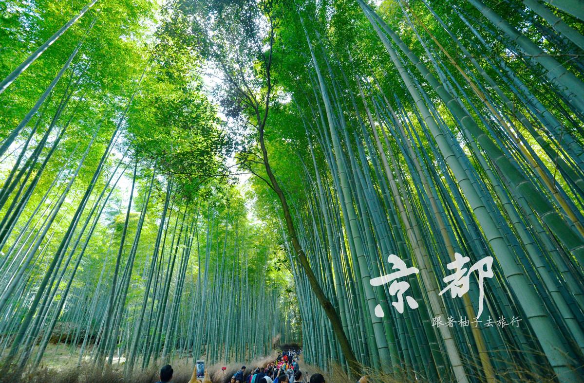 京都 嵐山竹林.jpg