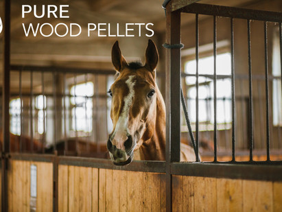 Maintaining Horse Stables During The Summertime