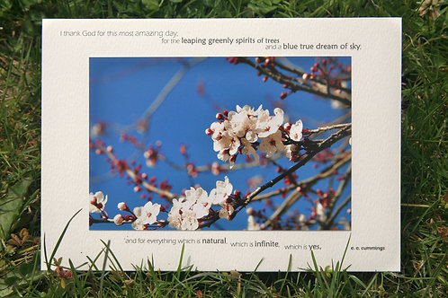 Ornamental Cherry: Photo Greeting Card