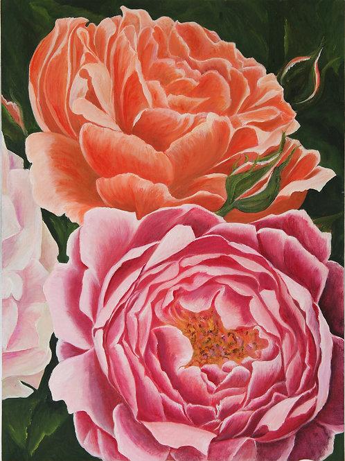 Card English Rose