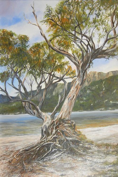 Ancient Tree, Cradle Mountain