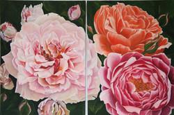 English + Musk Roses - LARGE