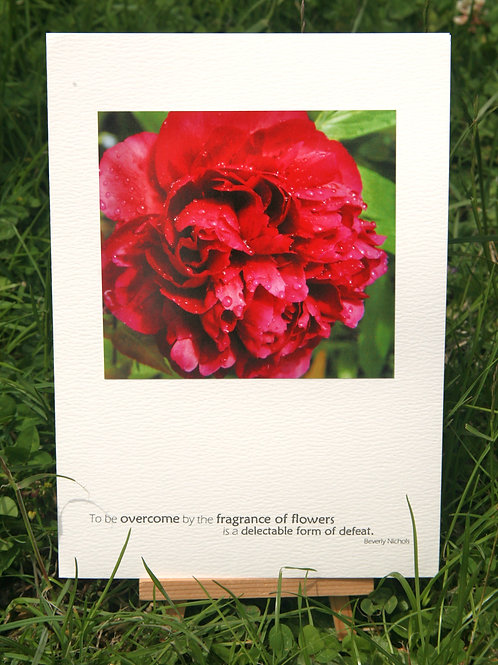 Peony: Photo Greeting Card