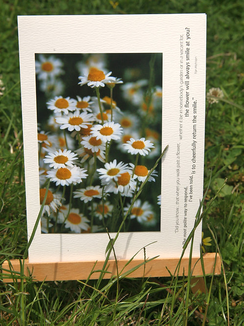 German Chamomile: Photo Greeting Card
