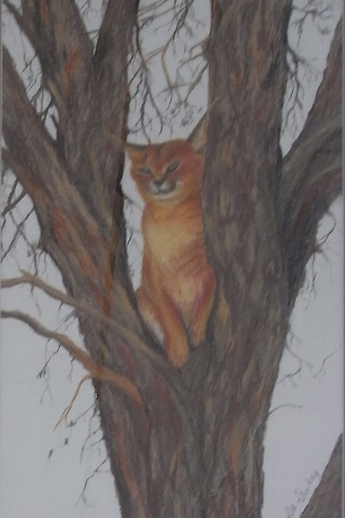 Cougar up a tree