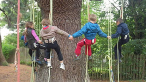 La grimpe d'arbres - Parcabout