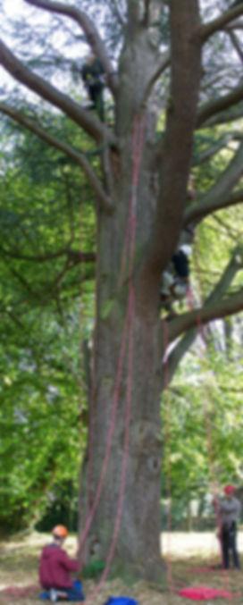 L'escalade aux arbres avec le Dédale des cimes