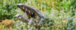 Pelas-Mãos-de-Alagoas_13_As-criaturas-de