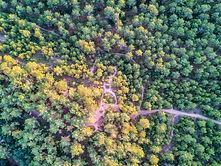 forêt st Jean de Monts.jpg