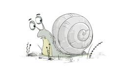 snail sketch