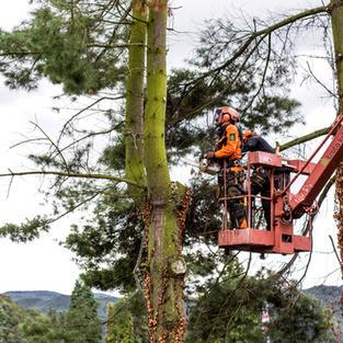 Obrezovanje drevesa - Podbočje