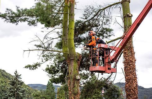 obrezovanje dreves, obrezovanje grmov, u