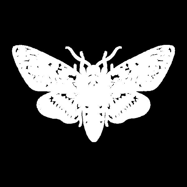 moth 1.png