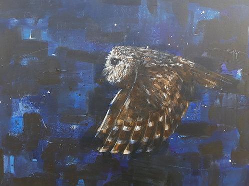 Dark Wings - Tawny Owl
