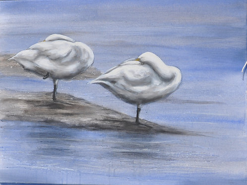 Beswick Swans on Canvas