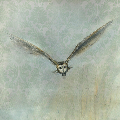 Incoming - Barn Owl