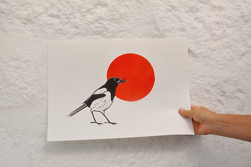 Magpie watching the Red Sun