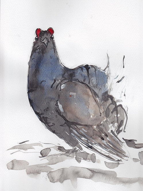 Black Grouse Painting