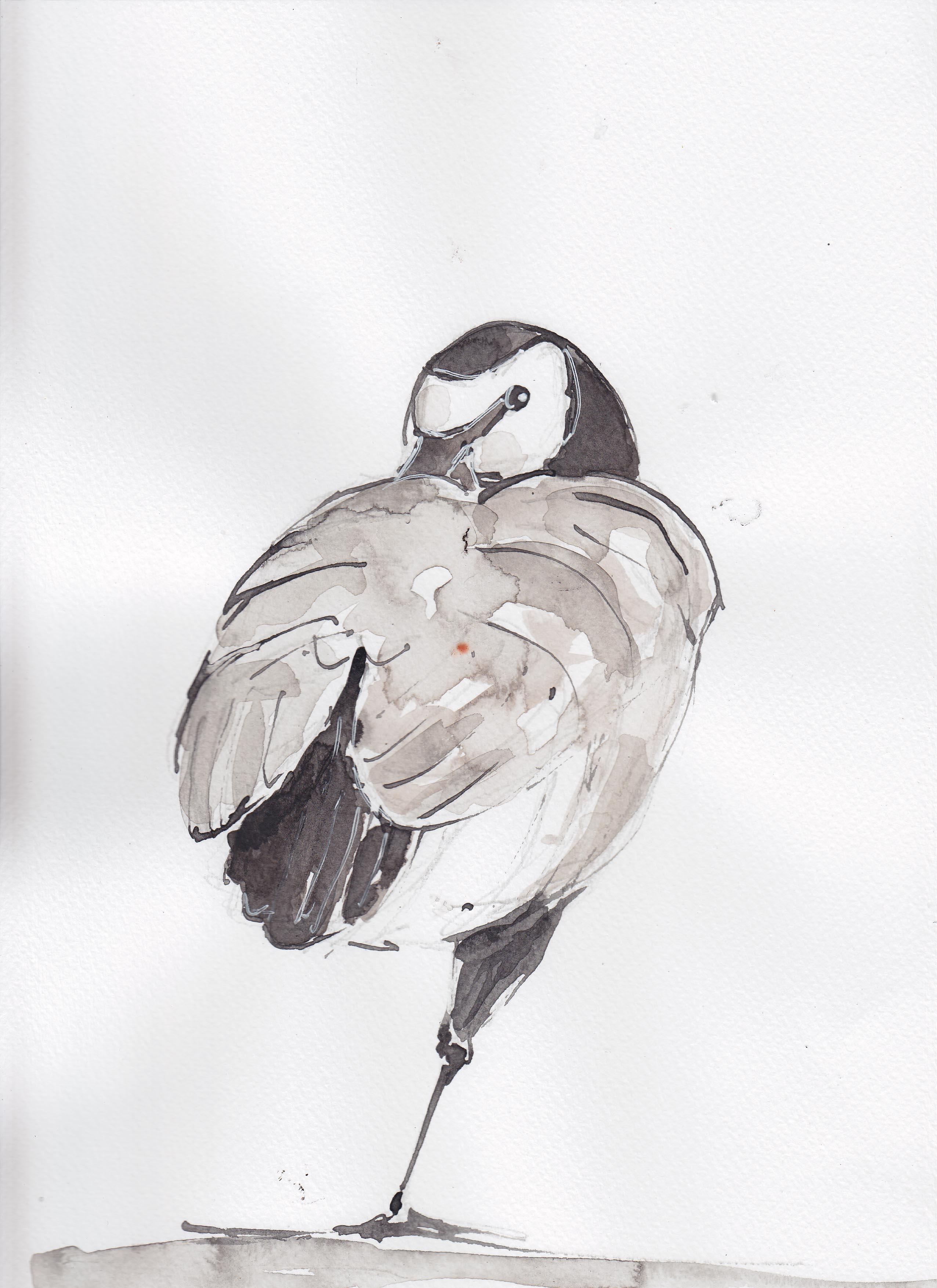 26 barnacle goose copy.jpg