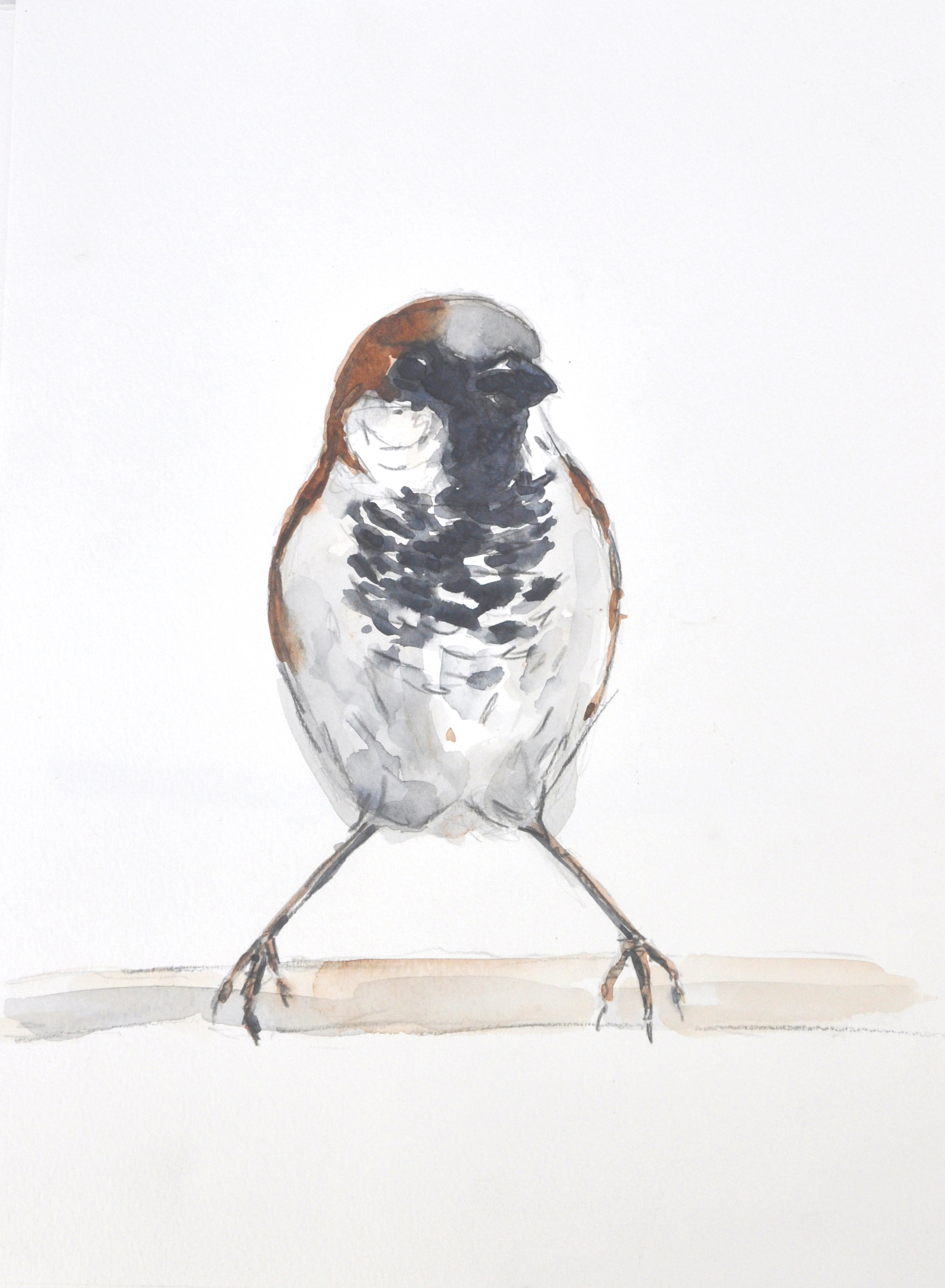 Wildbird Watercolour Painting (9)