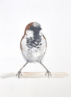 Wildbird Watercolour Painting (9)