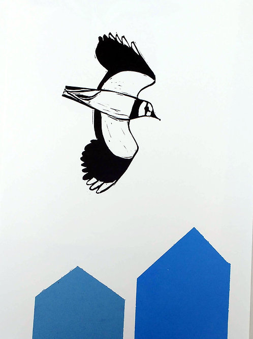 Lapwings over blue roof tops