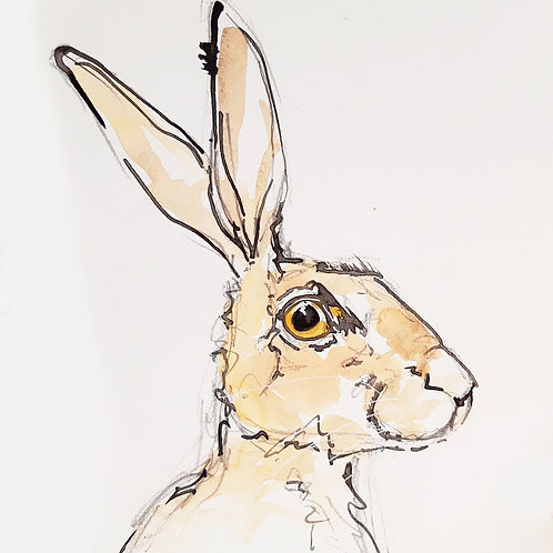 Happy Hare Sketch