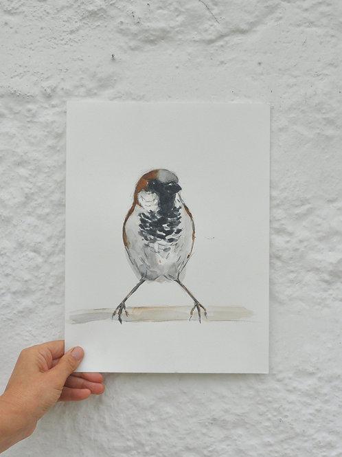 Sparrow Original Painting