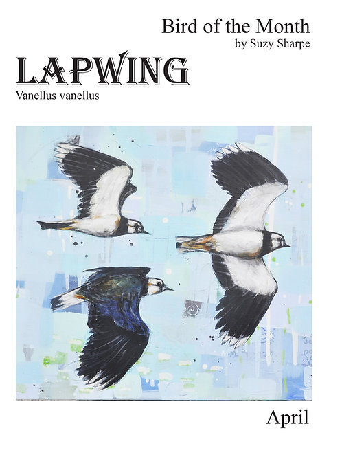 Bird of the Month April - Lapwing