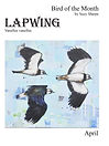 Lapwing-cover.jpg