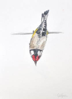 Goldfinch Wildbird Watercolour Painting