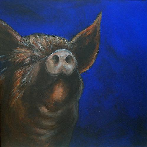 Boris the Tamworth Pig Card
