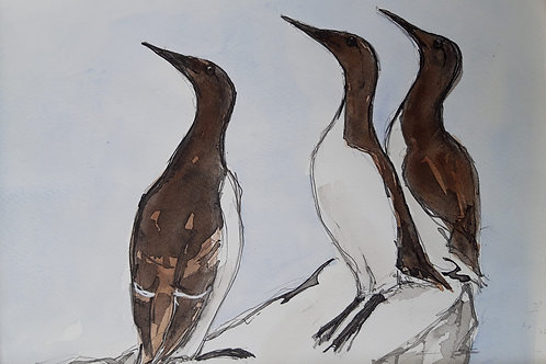 Look out! Guillemots Painting
