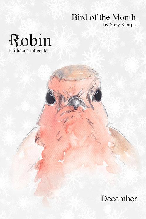 Bird of the Month - December Robin